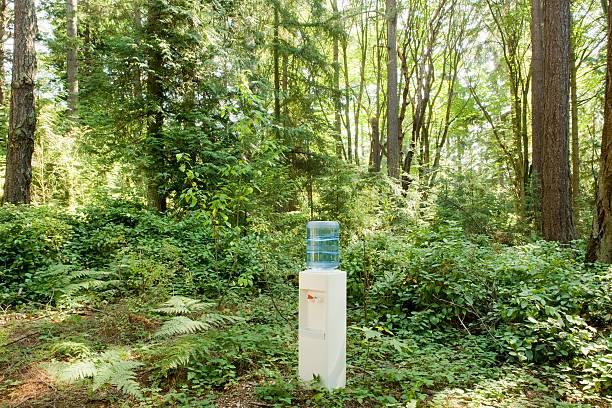 Fontaine à eau placée en pleine nature dans la forêt
